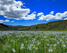 Фото США Небо Ирисы Луга Калифорния Холмов Облако Bridgeport Природа