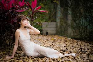Картинки Азиатки Размытый фон Шатенки Сидящие Платье Руки Листья девушка