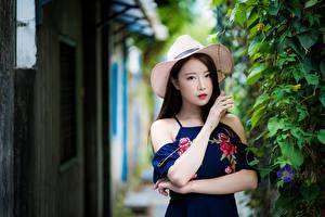 Фотография Азиатка Кустов Размытый фон Шляпе Брюнетки Смотрит Руки молодые женщины