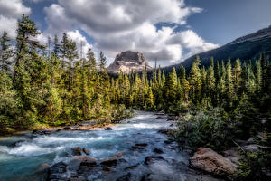 Фотографии Канада Парк Гора Лес Речка Камень Пейзаж Облачно Дерево Yoho National Park, British Columbia Природа
