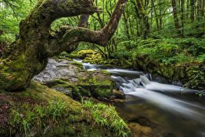 Обои Англия Леса Камень Дерево Мха Ручеек Cornwall Природа