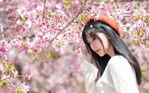 Картинка Цветущие деревья Азиаты Ветки Берет Брюнетка Свитера Сакура молодые женщины