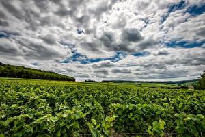Фото Франция Поля Небо Виноградник Облака Кусты Dormans