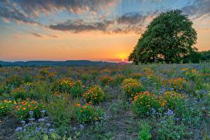 Фото Германия Поля Луга Вечер Рассветы и закаты Дерева Солнца Klausen Природа