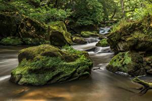 Фото Германия Лес Камень Мха Ручеек Irrel, river Prüm Природа