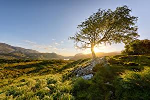 Картинка Ирландия Горы Парк Камень Деревьев Солнце Траве Killarney National Park Природа