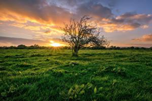 Фото Ирландия Рассветы и закаты Луга Траве Деревьев Облака Donegal Природа