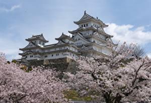 Картинка Япония Замки Весенние Цветущие деревья Himeji Castle город