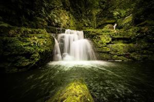 Картинка Новая Зеландия Леса Камень Реки Водопады Мох Tautuku River, Lower McLean Falls Природа