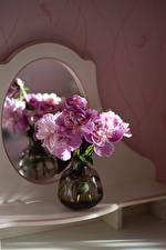 Фотографии Пион Вазе цветок