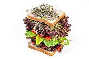Обои Сэндвич Хлеб Овощи Белом фоне microgreen Пища