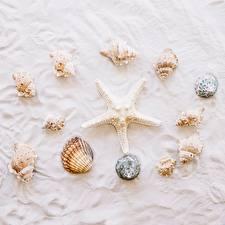 Картинки Ракушки Морские звезды Песок