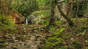 Фото Испания Леса Камень Деревьев Ручеек Лист Asturias