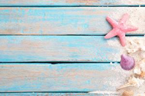 Обои Морские звезды Ракушки Доски Шаблон поздравительной открытки Песке