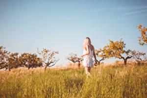 Картинка Лето Трава Блондинок Платье Идет Размытый фон молодые женщины