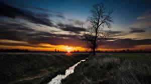Фотографии Рассвет и закат Луга Ручеек Дерево Траве Солнце Природа