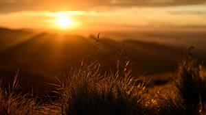Обои Рассветы и закаты Лучи света Траве Размытый фон Природа