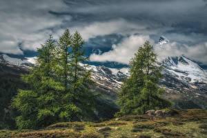 Картинки Швейцария Гора Небо Альп Ели Облака HDR Zermatt