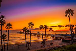 Фотографии США Побережье Рассвет и закат Причалы Калифорнии Пальма Пляж San Clemente Beach Природа
