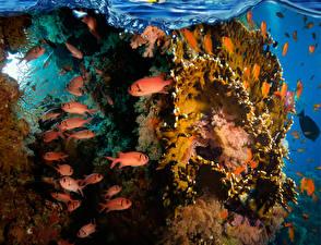 Картинка Подводный мир Кораллы Рыбы Животные