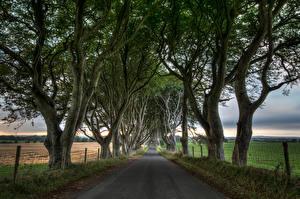 Картинки Великобритания Дороги Поля Дерева HDR Northern Ireland, Dark Hedges Природа