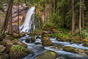 Фото Австрия Леса Водопады Камни Деревья Мхом Ручеек Gollinger Wasserfall Природа