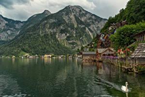 Обои Австрия Халльштатт Озеро Гора Альпы Города