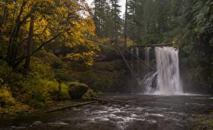 Обои Осень Америка Водопады Реки Дерева Oregon, Silver Falls State Park, Upper North Falls, Silver Creek Природа