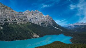 Фотографии Канада Горы Озеро Парк Банф Peyto Lake, Alberta Природа