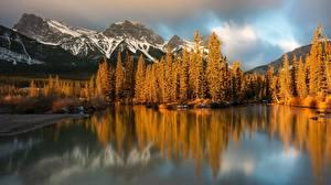 Обои Канада Парк Осень Горы Леса Банф Alberta, Canadian Rockies, Policeman's Creek Природа