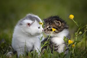 Обои Кошки Трава Размытый фон Котята Двое Милые Животные картинки