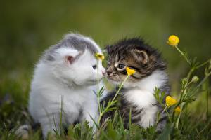 Картинки Кошка Трава Размытый фон Котенка Две Милый Животные