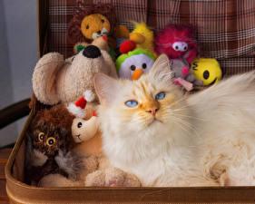Картинки Коты Игрушка Взгляд животное