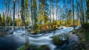 Фотографии Финляндия Реки Камень Парки Деревья Береза River Kitkajoki, Oulanka National Park Природа
