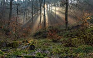 Обои Германия Лес Деревья Мха Лучи света South-Eifel Природа