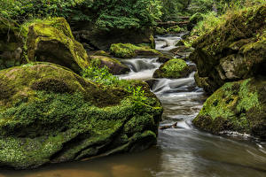 Картинки Германия Леса Камни Ручеек Мох South Eifel Природа