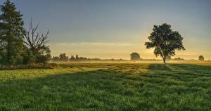 Картинка Германия Рассветы и закаты Поля Бавария Дерево Трава Тумана Augsburg Природа