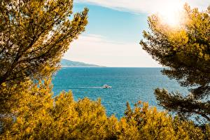 Фотография Монако Море Яхта Ветки Monaco-Ville Природа