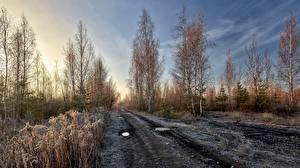 Обои Утро Дороги Иней Дерево