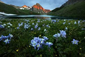 Картинка Гора Озеро Луга Пейзаж Фиолетовые Aquilegia Цветы Природа