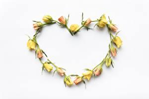 Фотография Роза Сердце Белым фоном Шаблон поздравительной открытки Цветы