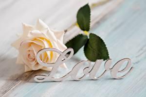Обои для рабочего стола Роза Любовь Слово - Надпись Английский цветок