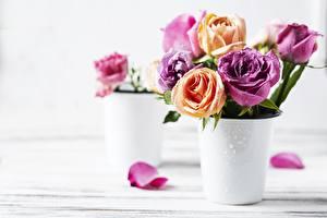 Картинки Розы Лепестки Ваза Боке Цветы