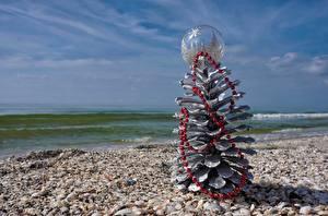 Картинки Ракушки Море Новый год Шишки