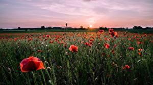 Картинки Рассветы и закаты Луга Маки Красный Бутон Солнца Природа