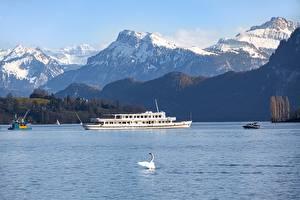 Фотографии Швейцария Горы Озеро Птицы Лебеди Речные суда Альп lake Lucerne Природа