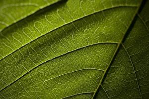 Фотография Текстура Вблизи Листья Зеленая Природа