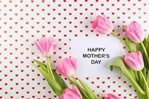 Обои Тюльпан День матери Розовая цветок