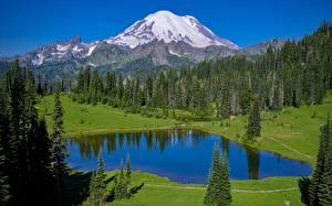 Фотография США Гора Лес Озеро Парк Mount Rainier national Park, Tipsoo Lake, Washington state Природа