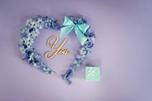 Обои для рабочего стола День всех влюблённых Незабудка Сердце Бант цветок